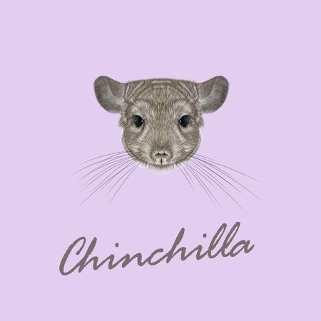 lanigera: Cute fluffy face of Chinchilla on pink background. Illustration