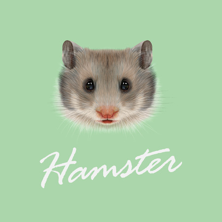 cute hamster: Cute grey face of domestic Hamster on green background.