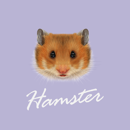 Cute red face of domestic Hamster on violet background.
