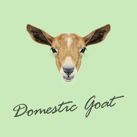 Cute face of beige Goat on green background. Illustration