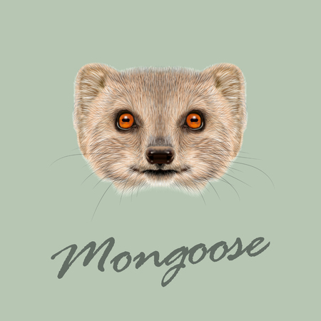 mongoose: Cute face of grey Mongoose with orange eyes on green background.