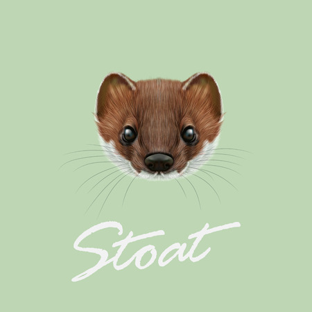 marten: Cute face of red stoat on green background. Illustration