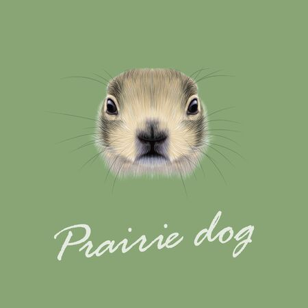 prairie dog: Cute face of meadow Rodentia animal on green background. Illustration