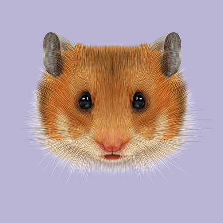sable: Cute red face of domestic Hamster on violet background.