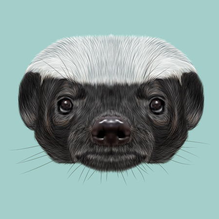 Cute face of ratel on blue background.