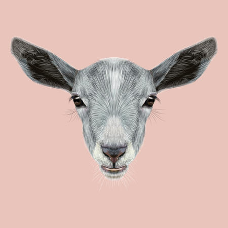 animal eyes: Cute face of grey Goat on pink background