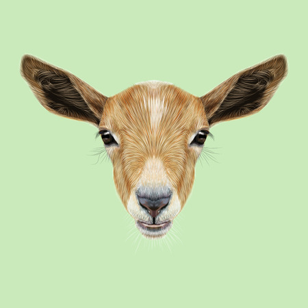 Cute face of beige Goat on green background. Stock Photo