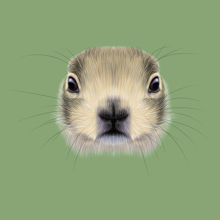 prairie dog: Cute face of meadow Rodentia animal on green background. Stock Photo