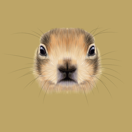 cheeks: Cute face of meadow Rodentia animal on beige background.
