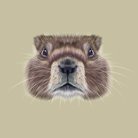 burrows: Cute face of meadow Rodentia animal on beige background.