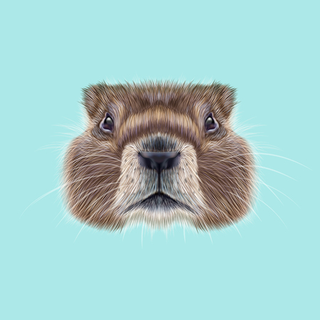 burrows: Cute face of meadow Rodentia animal on blue background.