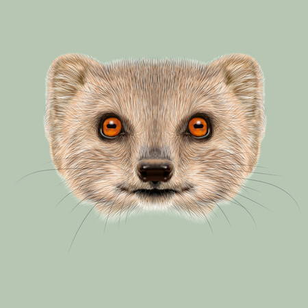 Cute face of grey Mongoose with orange eyes on green background. Stock Photo - 54949717