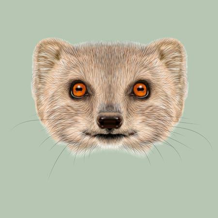 Schattig gezicht van grijze Mongoose met oranje ogen op groene achtergrond.