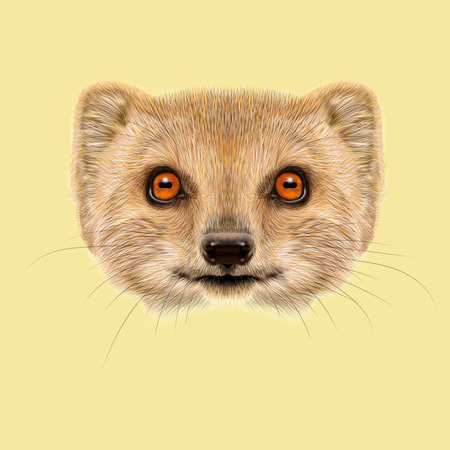 mongoose: Cute face of gold Mongoose with orange eyes on yellow background.