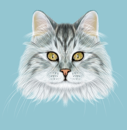tabby: Cute face of grey tabby cat on blue background.