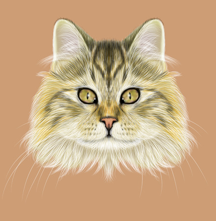 tabby cat: Cute face of brown tabby cat on coffee color background.
