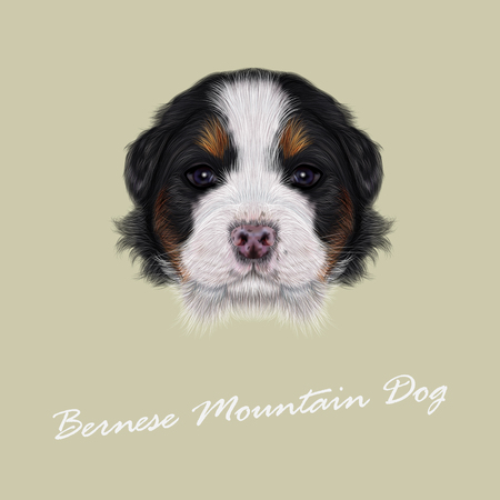 bernese: Cute fluffy face of tricolor domestic dog on beige background. Illustration
