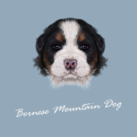 bernese: Cute fluffy face of tricolor domestic dog on blue background. Illustration