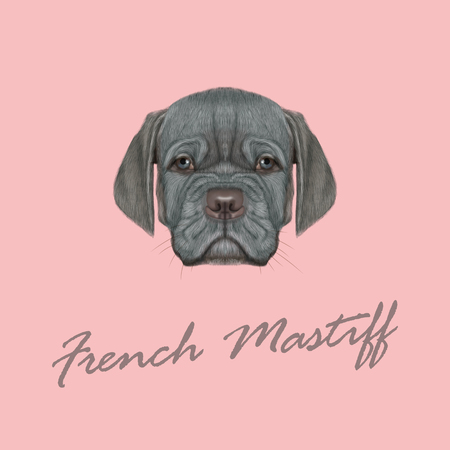 bordeauxdog: Cute face of silver domestic dog with blue eyes on pink background. Illustration