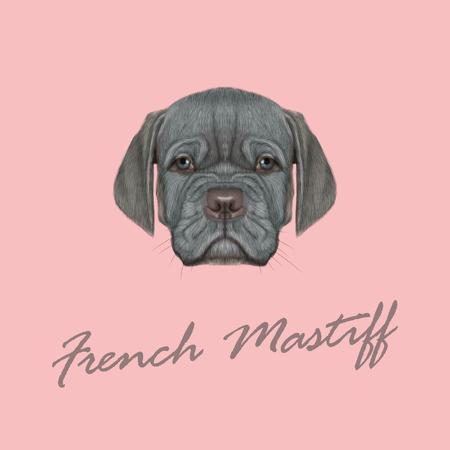 Schattig gezicht van zilver binnenlandse hond met blauwe ogen op roze achtergrond. Stock Illustratie