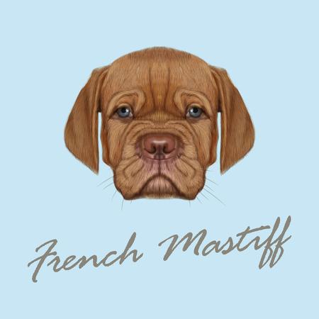 Schattig gezicht van rode binnenlandse hond met blauwe ogen op een blauwe achtergrond.