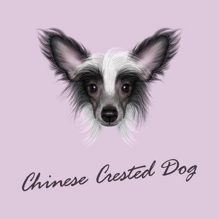 forelock: Cute face of wonderful bicolor domestic dog on pink background. Illustration