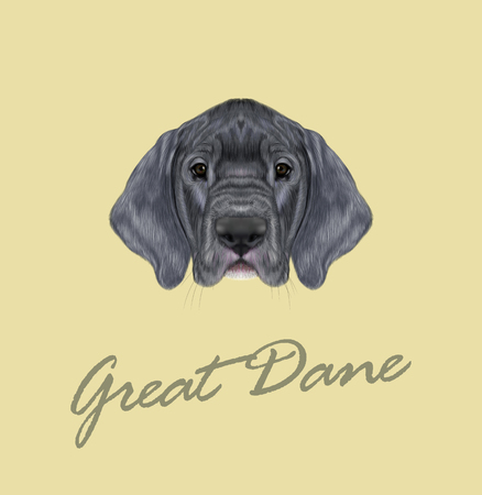 great dane: Cute face of silver domestic dog on yellow background. Illustration