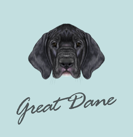 Visage mignon de chien domestique noir sur fond bleu. Banque d'images - 55570330