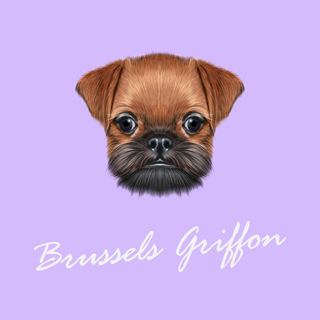 griffon bruxellois: Cute bearded face of domestic dog on violet background. Illustration