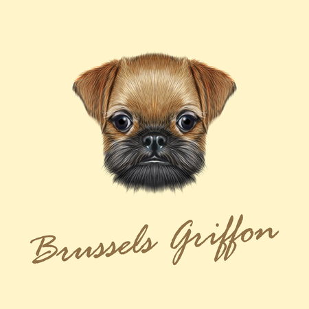 griffon: Cute bearded face of domestic dog on yellow background. Illustration