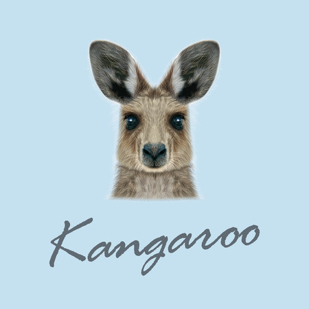 Cute head of wild Australian mammal on blue background.