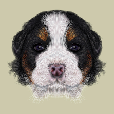 bernese: Cute fluffy face of tricolor domestic dog on beige background. Stock Photo