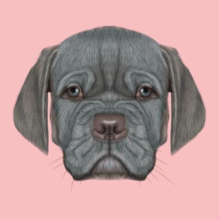 Schattig gezicht van zilver binnenlandse hond met blauwe ogen op roze achtergrond. Stockfoto