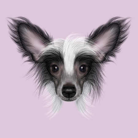 forelock: Cute face of wonderful bicolor domestic dog on pink background. Stock Photo
