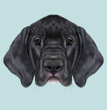great dane: Cute face of black domestic dog on blue background. Stock Photo