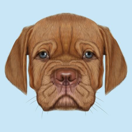 Cute face of red domestic dog with blue eyes on blue background. Stock Photo