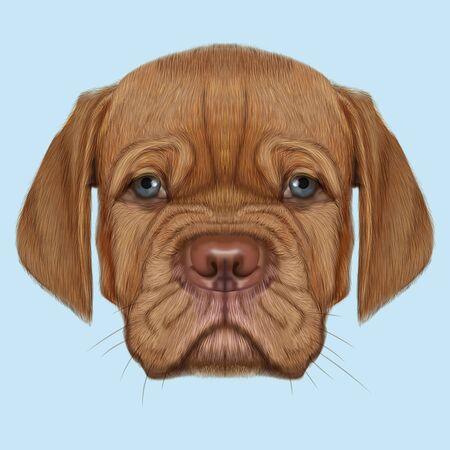 Leuk gezicht van rode huisdier met blauwe ogen op blauwe achtergrond.