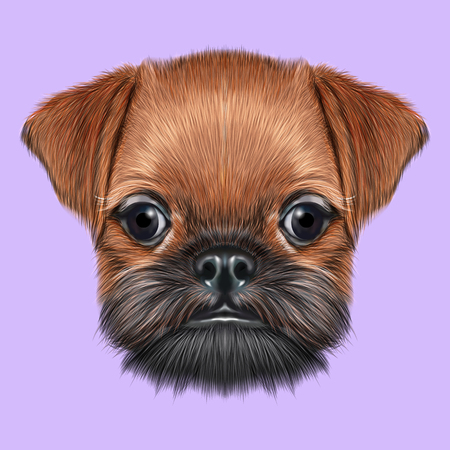 griffon bruxellois: Cute bearded face of domestic dog on violet background. Stock Photo
