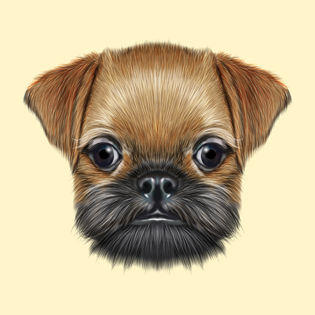 pug nose: Cute bearded face of domestic dog on yellow background. Stock Photo