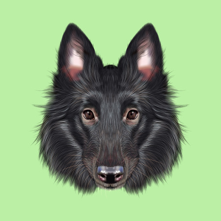 berger: Cute face of black domestic dog on green background.