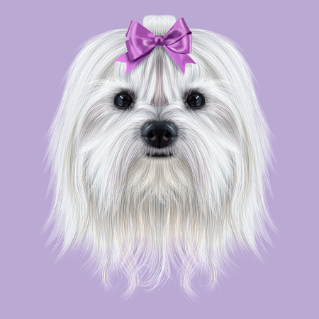 cara mullida blanca linda del perro doméstico en el fondo violeta.