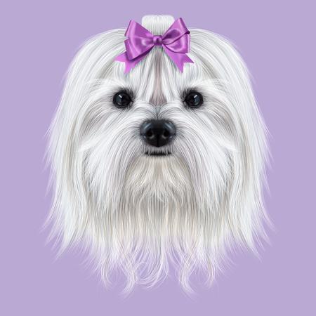 Schattig witte pluizige gezicht van de binnenlandse hond op paarse achtergrond.