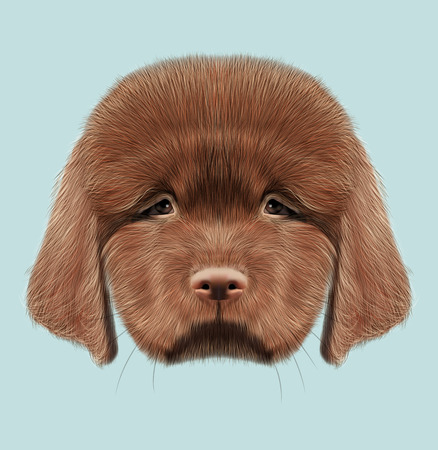 doggie: Cute fluffy red face of domestic dog on blue background.