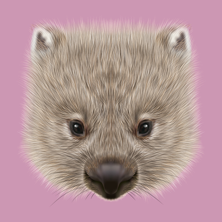 Cute face of Australian mammal on pink background. Stock Photo