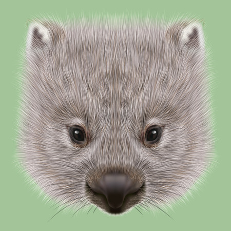 cheek: Cute face of Australian mammal on green background. Stock Photo