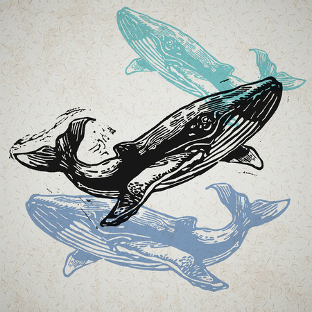 cartoon sperm: Vector Whale animals in abstract composition. Linocut whales in different colours on the old paper