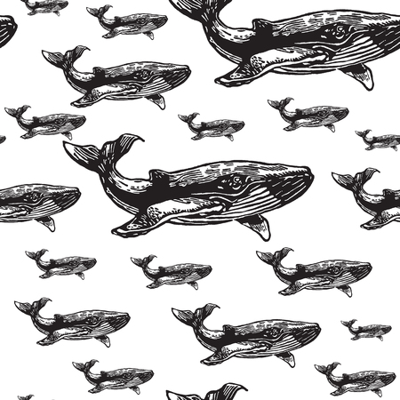 Whale black and white seamless vector pattern. Realistic engraved style of whale animals on white background. Stock Illustratie