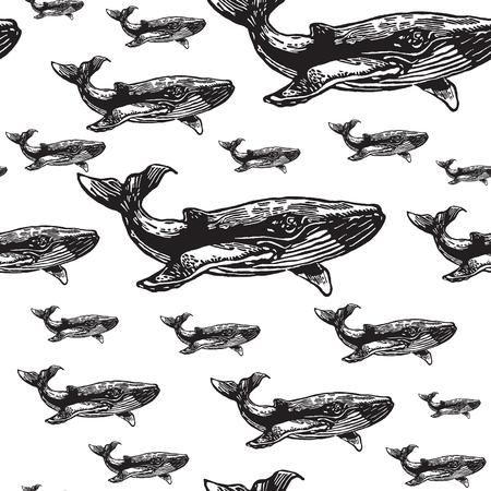 Wieloryb czarno-biały bez szwu wektora. Realistyczne grawerowane stylu wielorybów na białym tle. Ilustracje wektorowe