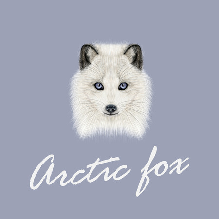 fluffy: Illustrated Portrait of Arctic fox. Cute white fluffy face of Polar Fox on dark blue background.