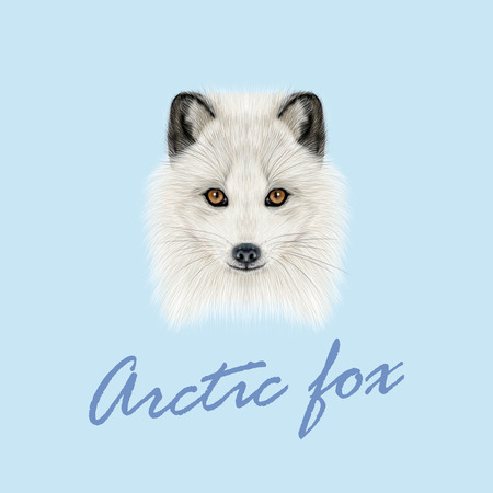 Illustrated Portrait of Arctic fox. Cute white fluffy face of Polar Fox on blue background.
